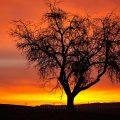 Landschaft im Morgenrot
