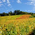Ipsheimer Wein-Wander-Weg